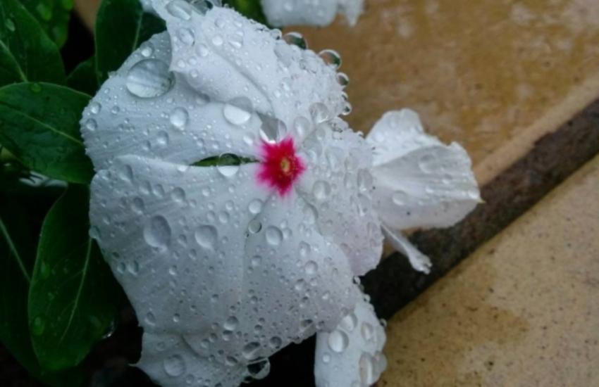 Chove em mais de 100 municípios do Ceará neste sábado