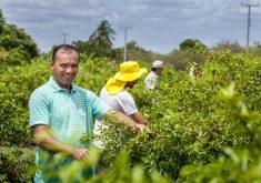 O agricultor está inovando na Região (FOTO: Secretaria de Desenvolvimento Agrário)