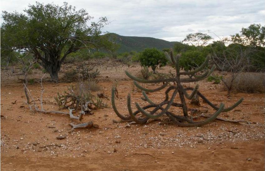 11% do território cearense está desertificado e perdeu a capacidade produtiva
