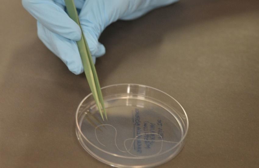 Professora da Uece descobre proteína que pode ajudar a combater o câncer
