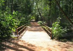 Serão plantadas no Parque do Cocó (FOTO: Divulgação)