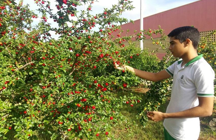 Estudantes cearenses espalham plantações de acerola em escolas de Pereiro