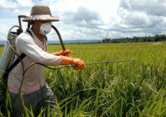 Os agricultores ficam mais vulneráveis a doenças (FOTO: Agência Brasil)
