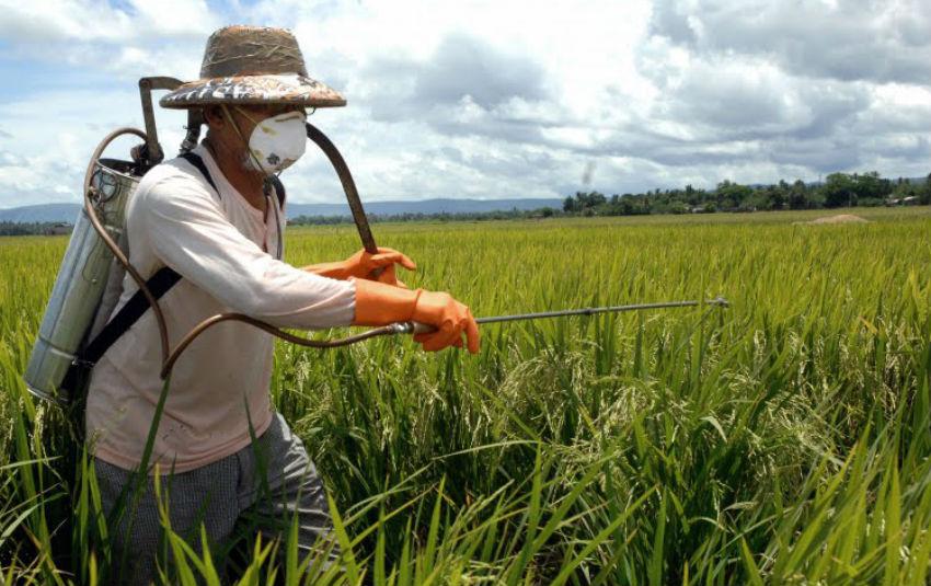 Pesquisa inédita revela que uso de agrotóxicos no Ceará afeta o DNA de agricultores