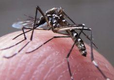 O índice de Chikungunya no Ceará é o mais alto do país (FOTO: Rafael Neddermeyer / Fotos Públicas)
