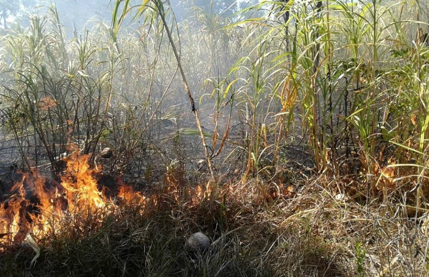 Incêndio atinge ONG cearense que cuida de cachorros abandonados