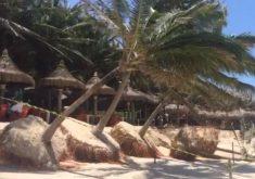 O mar avançou e derrubou alguns coqueiros (FOTO: Reprodução/Whatsapp)