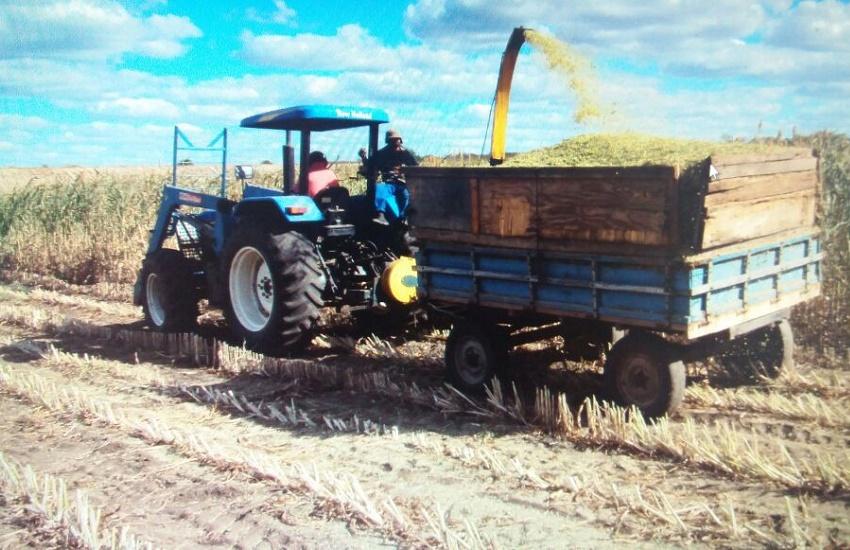 Governo de Israel cria fazenda-modelo no Ceará para ajudar na produção de agricultores locais