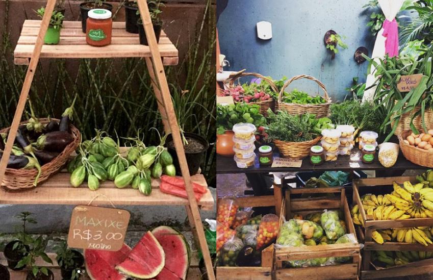 Empreendedoras cearenses criam projeto que barateia o preço de alimentos orgânicos em 400%