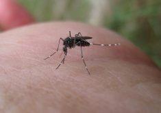 Mosquito é transmissor da Dengue, Zika e Chikungunya (FOTO: John Tann/Flickr/Creative Commons)