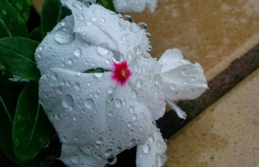 Sábado amanheceu chuvoso em vários municípios (FOTO: Breno Mororó/Tribuna do Leitor)