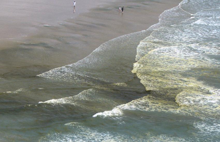 O que são as manchas marrons na Praia do Futuro? Pesquisadores têm uma resposta