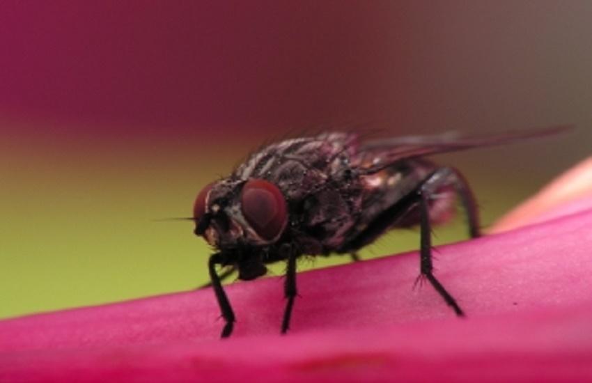 Virose da mosca? Especialista dá dicas de como se prevenir da doença