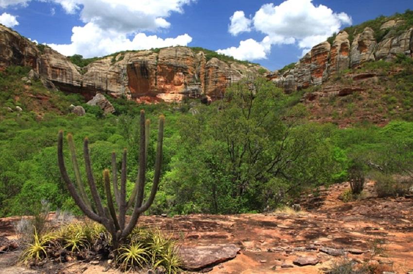 Dia da Caatinga: livro discute por que políticas hídricas não alteram situação do semiárido