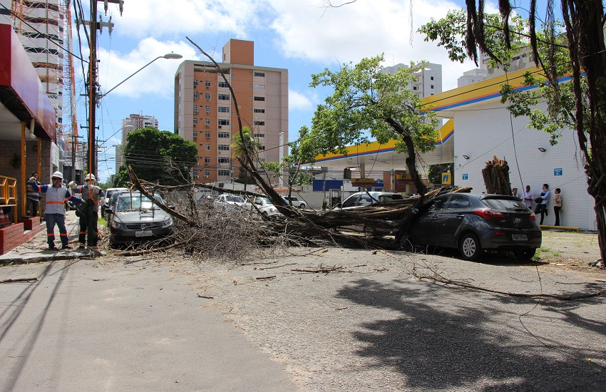 Três carros são atingidos com queda de árvore no bairro Dionísio Torres, em Fortaleza