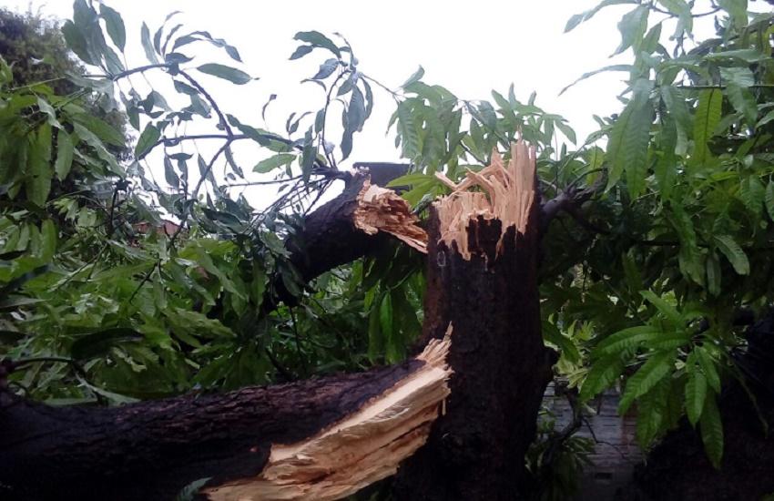 Raio parte ao meio árvore de grande porte durante chuva em Fortaleza