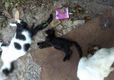 Gatos mortos espancados