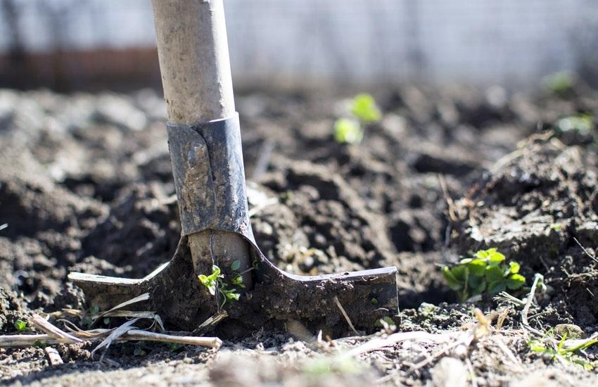 Maioria dos deputados federais do Ceará tem atuação desfavorável à natureza e aos trabalhadores rurais