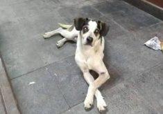 Um cachorro foi agredido e morto em São Paulo (FOTO: Reprodução WhatsApp)