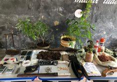 Policiais localizaram uma plantação de maconha e um laboratório de drogas. (Foto: Divulgação)