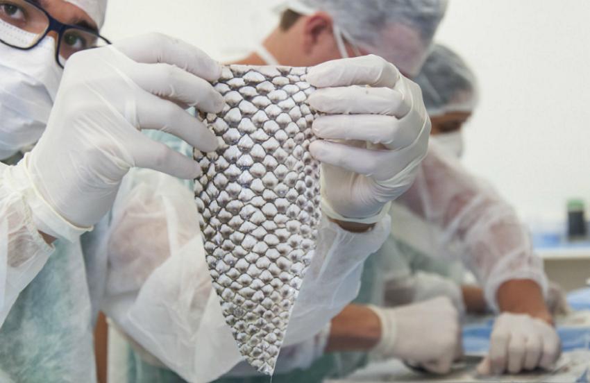 Pele de tilápia é usada em reconstrução vaginal após cirurgia de redesignação sexual