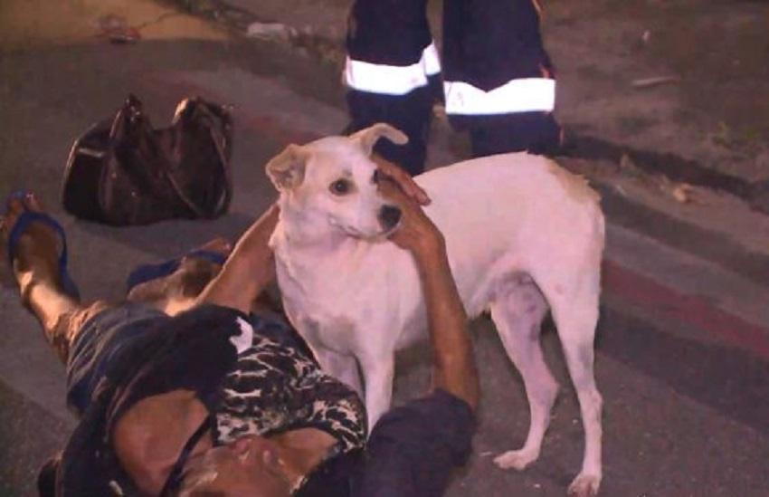 Por que cachorros escolhem uma pessoa para proteger e seguir? Especialista explica