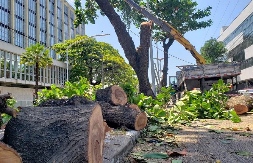 Entre as árvores cortadas nesta quinta-feira (29), estão Pau-Brasil, Castanhola e Ipê (FOTO: Dorian Girão/TV Jangadeiro)