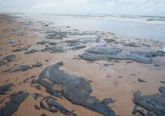 As manchas chegaram ao litoral cearense em setembro (FOTO: Marcos Rodrigues/Agência Brasil)