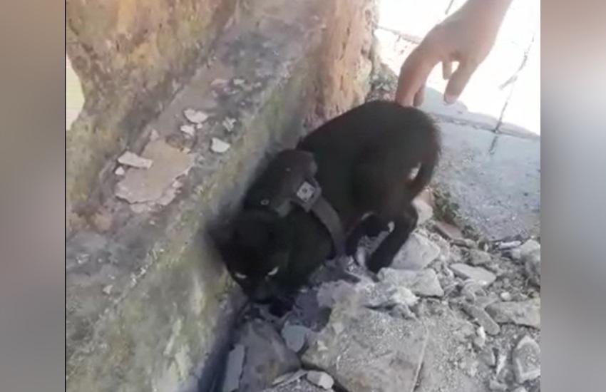 Vídeo de gato com suposta tornozeleira eletrônica em praça de Fortaleza circula nas redes sociais