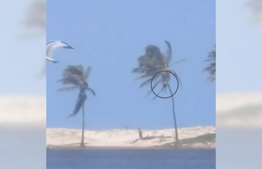 Aluno de kitesurf fica preso no topo de coqueiro na Lagoa do Cauípe