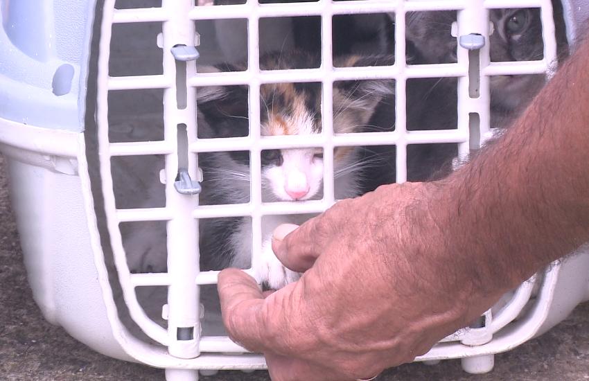 Moradores se revoltam com mortes de 18 gatos no Henrique Jorge