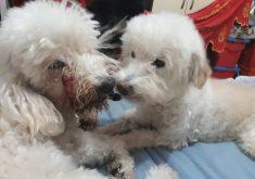 Raika e Rubi precisam fazer uma ovariohisterectomia (FOTO: Arquivo Pessoal)