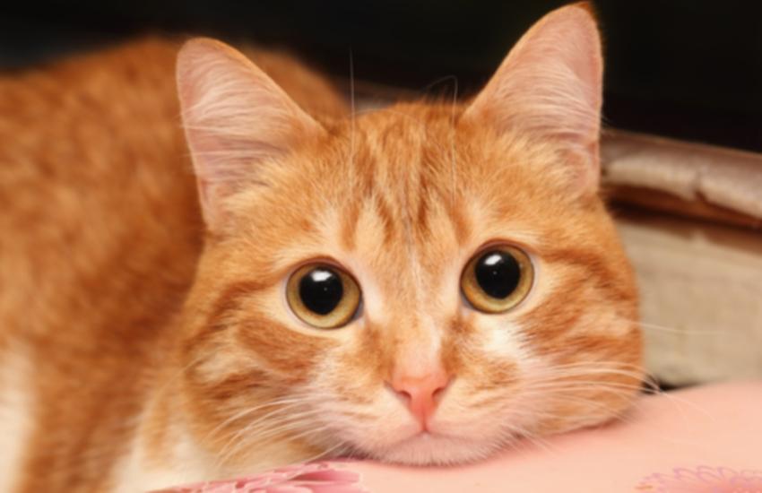 """Flávia Castelo: """"Vai um gatinho aí?"""""""