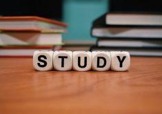 Falar inglês é resultado de prática e estudos. (Foto: Pexels)