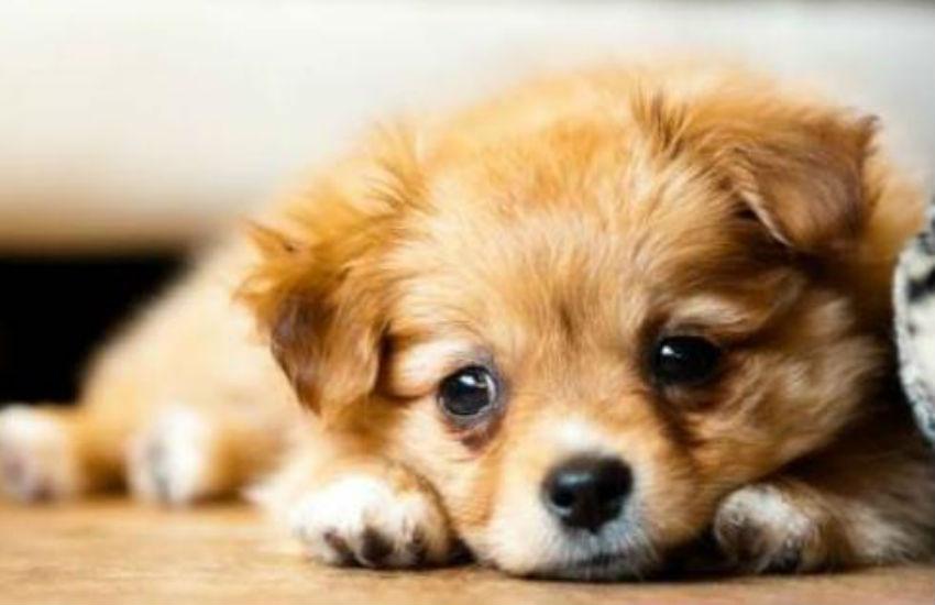Gatos sofrem mais do que cachorros na mudança de endereço de seu dono