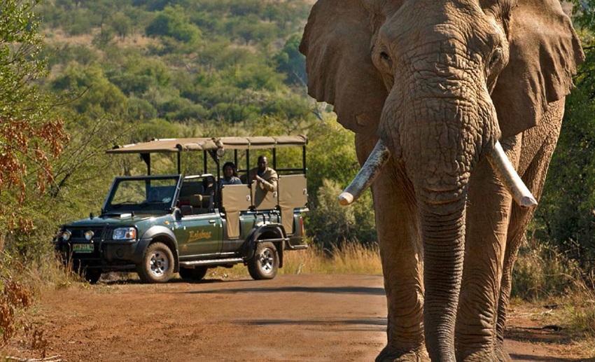 Cearenses mais perto da África do Sul: excursão une natureza e cultura em viagem exótica