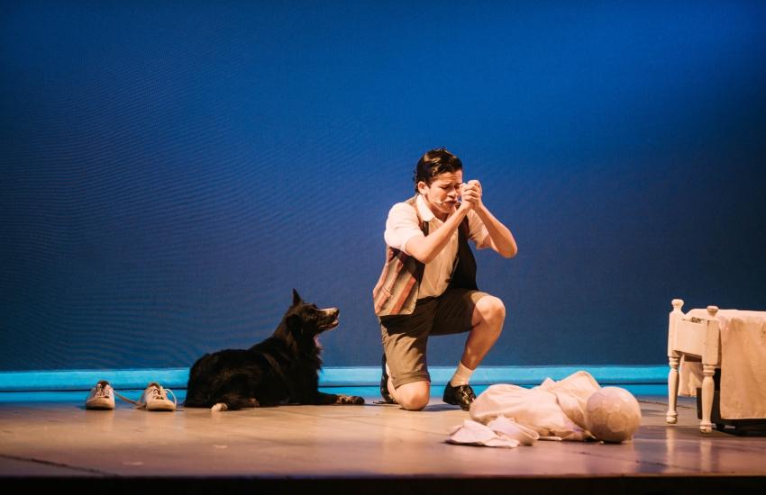 Conheça o cachorro que encanta o público com atuação no espetáculo Ceará Show