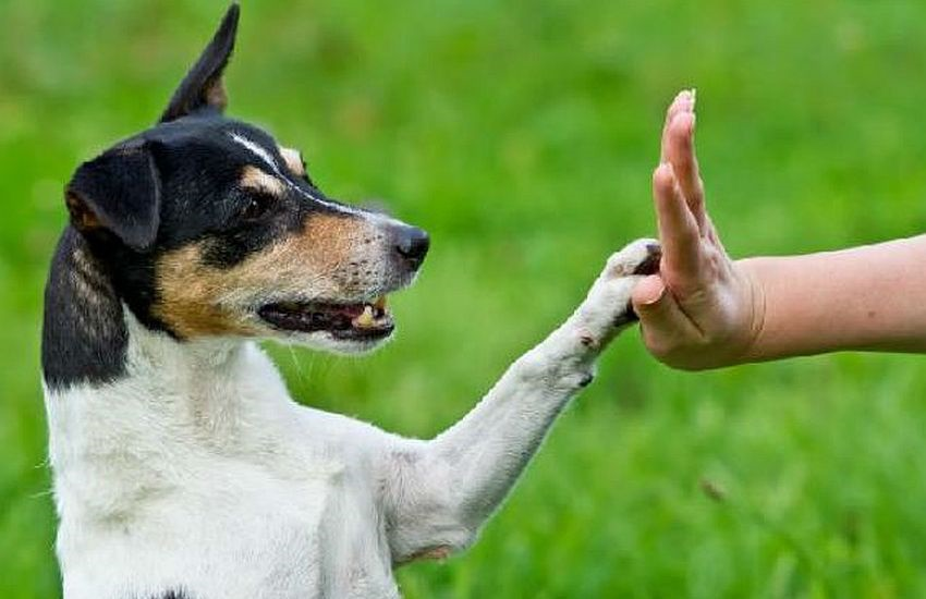 Adestrador dá dicas como ensinar seu cachorro a fazer xixi no lugar certo