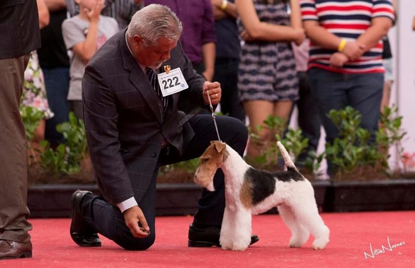 Exposição traz mais de 1.200 cães das raças mais raras do mundo a Fortaleza