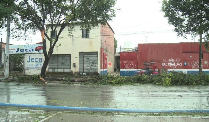 Queda árvore em Fortaleza (FOTO: Reprodução TV Jangadeiro)