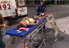 """Cachorro """"pastora"""" dona que foi agredida (FOTO: Reprodução TV Jangadeiro)"""