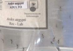 Dicas de prevenção tratamento chikungunya (FOTO: Reprodução TV Jangadeiro)