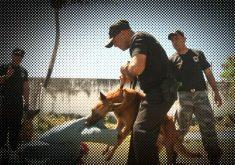 Cães são preparados para combater a criminalidade (FOTO: Reprodução TV Jangadeiro)