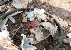 Carroceiro é flagrado jogando lixo de cemitério (FOTO: Reprodução TV Jangadeiro)