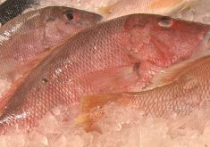 peixe semana santa
