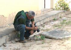 Cuidado com Aedes Aegypti deve ser redobrado (FOTO: Reprodução TV Jangadeiro)