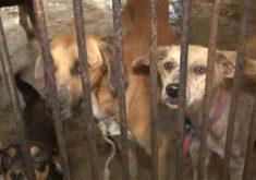 Cães são vítimas da leishmaniose em Fortaleza(FOTO: Reprodução Nordestv)