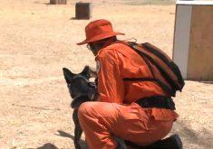 Repórter do Barra acompanha treinamento com cães do Corpo de Bombeiros (FOTO: Reprodução TV Jangadeiro)