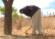 Agricultor que perdeu parte do braço é exemplo de superação (FOTO: Reprodução TV Jangadeiro)