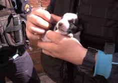 Policiais salvam cachorrinho preso em tubulação (FOTO: Reprodução TV Jangadeiro)